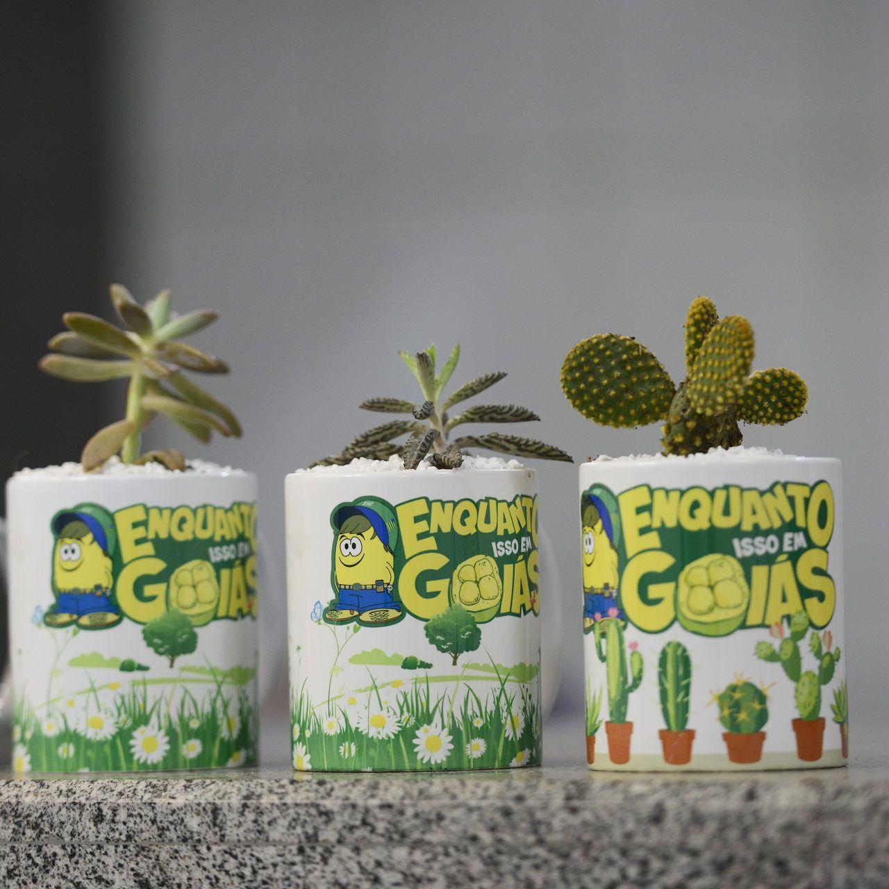 Planta na Caneca - Cacto