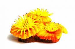 Soma Enfeite De Silicone Plate Polipos Amarelo