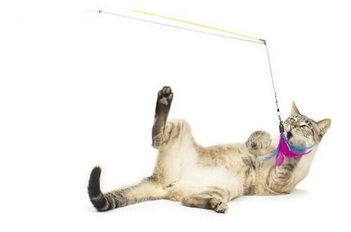Varinha Para Gatos Brinquedo Cat