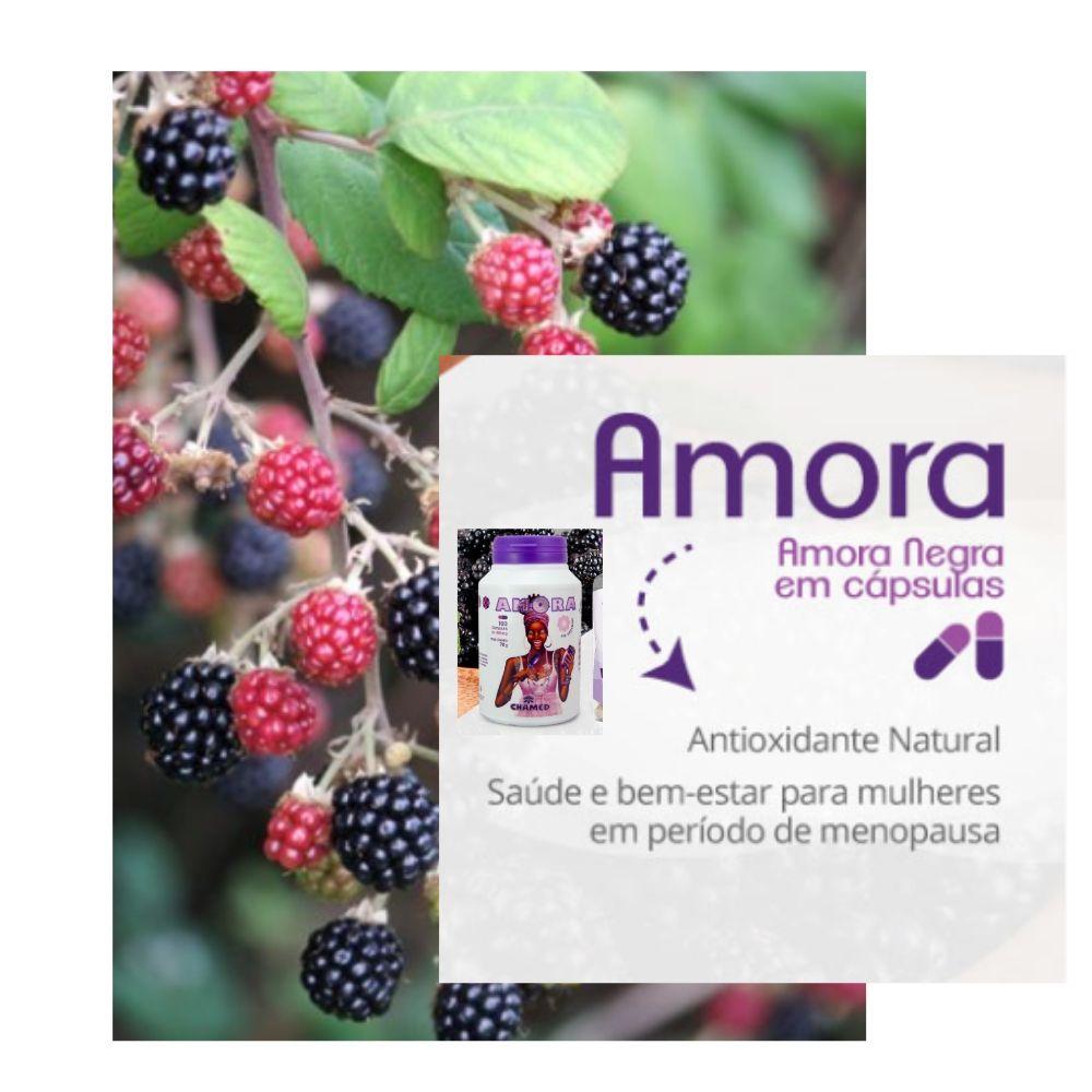 Amora Negra 5 Frascos de 100 cápsulas de 600 mg  Chamed  (Fabricante: Chamel)