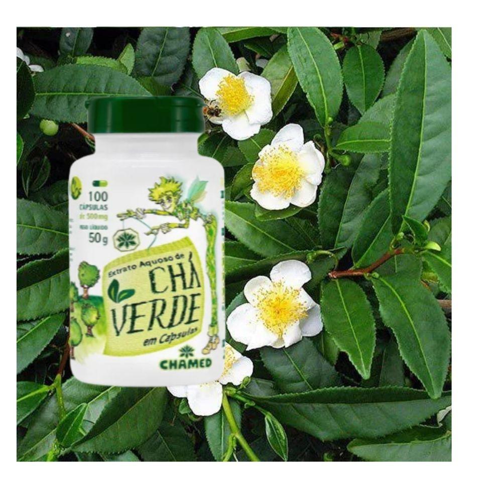 Chá Verde em Cápsulas  Camellia Sinensis 100 cápsulas  de 500mg  Chamed