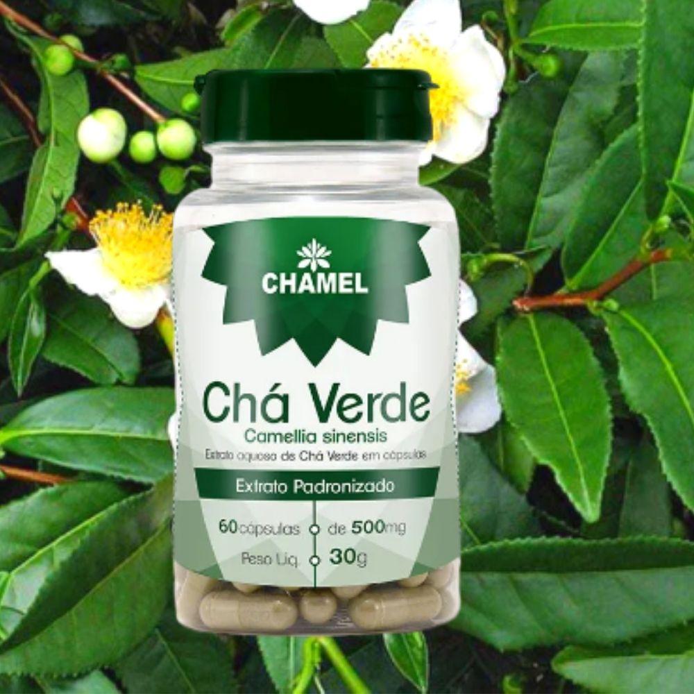 Chá Verde em Cápsulas  Camellia Sinensis -  60 cápsulas - de 500mg  Chamel