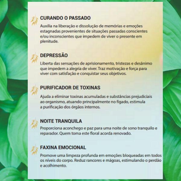 Floral Vibracional -  Ansiedade -  Fórmula Ouro - Segredos da Natureza - Floral Vibracional