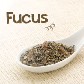 Fucus  1 KG ALGAS Marinhas (fucus Vesiculosus) - Sabor Verde