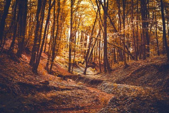 Mural de Parede Árvores Floresta 85463B