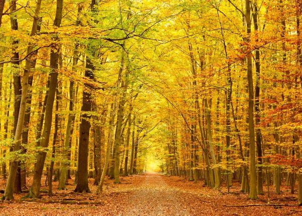 Mural de Parede Árvores Floresta 8545EF