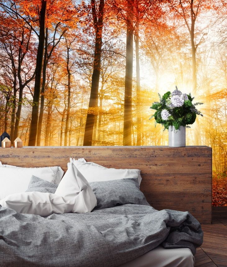 Mural de Parede Árvores Floresta 689185