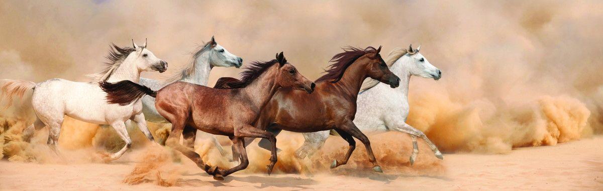 Mural de Parede Cavalos Selvagens 50CB6A
