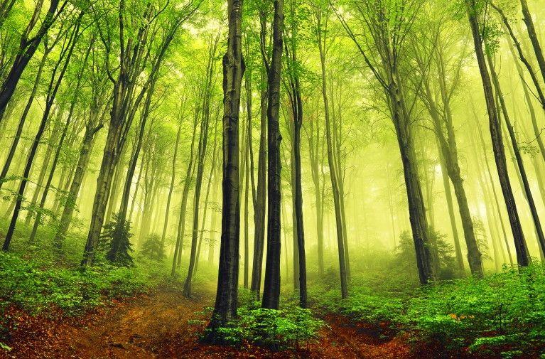 Mural de Parede Árvores Floresta 8118C0
