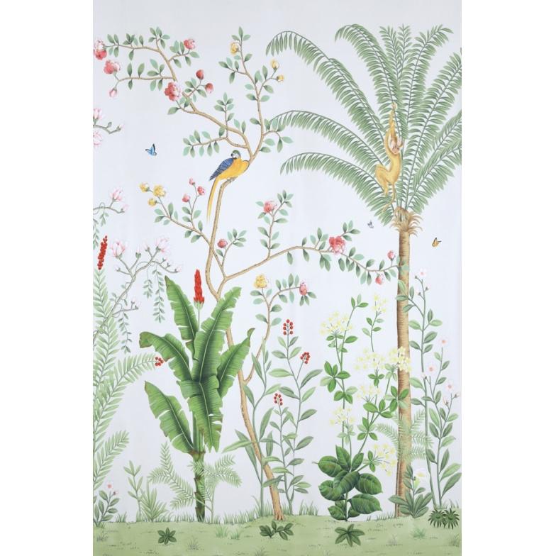 Papel de Parede Pássaros Animais Floresta Amazônia 156308C