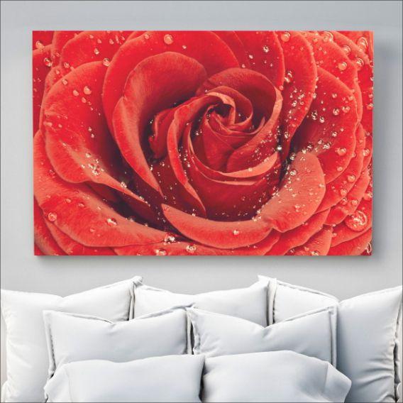 Quadro Closed Rosa Vermelha 4E35DD