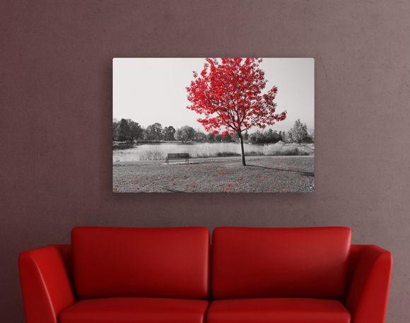 Quadro Preto e Branco com elemento Vermelho Paisagem Árvore 4E4838
