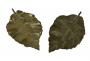 Antigo Par De Placas Folha Bronze Maciço