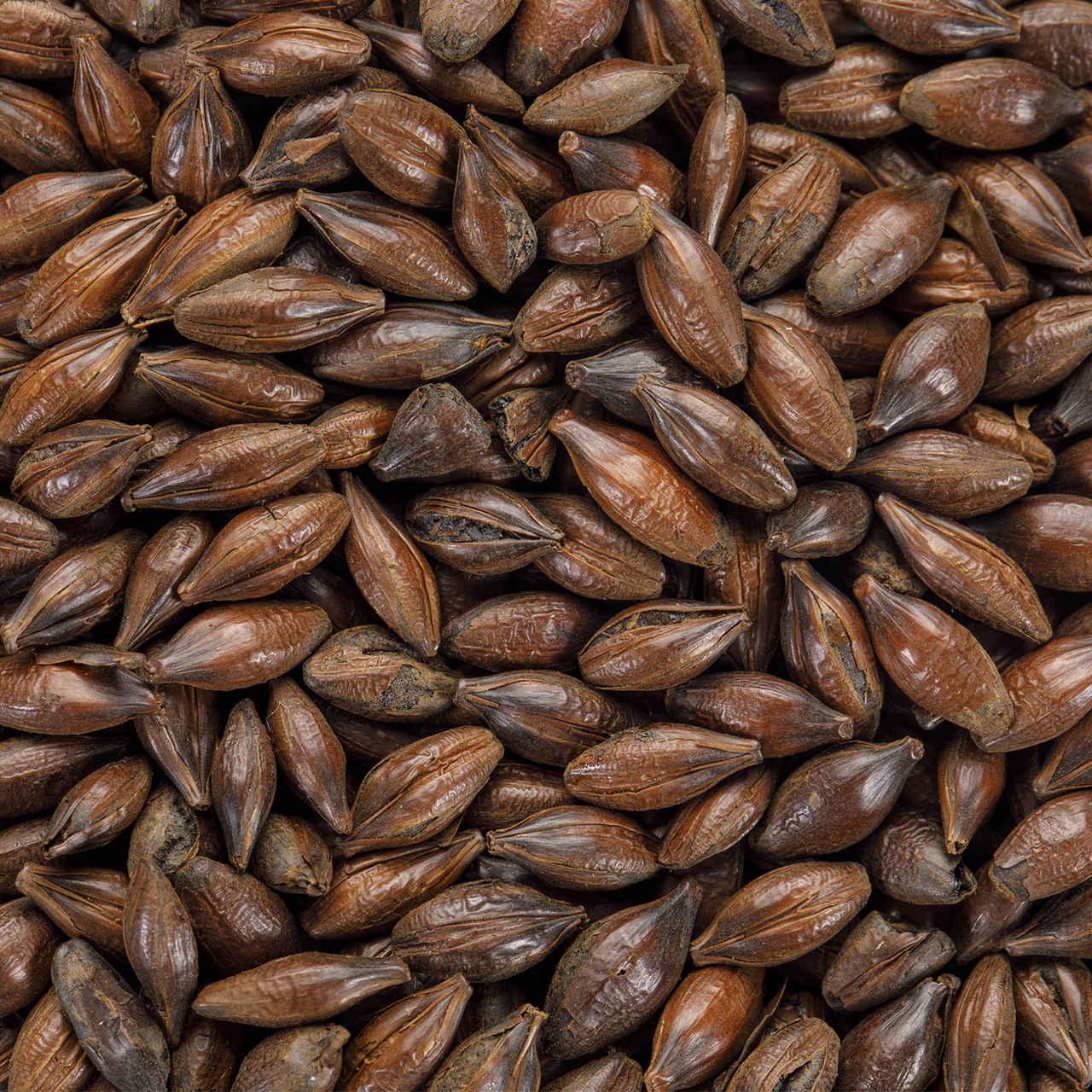 Malte BlackSwaen Barley (Cevada Torrada) Embalagem 250g