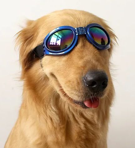 Óculos De Sol Para Cães Com Proteção Uv - Cor Azul
