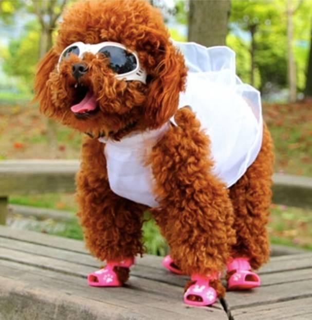 Óculos De Sol Para Cães Com Proteção Uv - Cor Branco