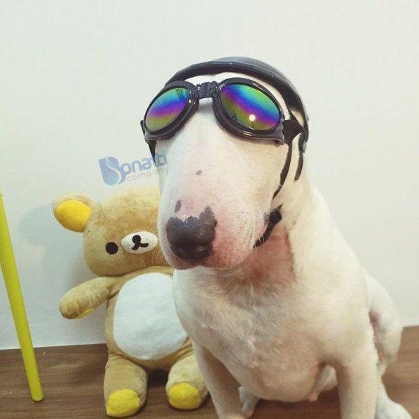 Óculos De Sol Para Cães Com Proteçao Uv - Cor Preto