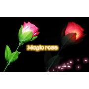 10 Luzes Magicas Flores D'lite