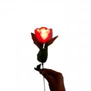 Kit 2 D lite e Rose Light