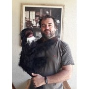 Macaco Ventriloco - Cor Preta