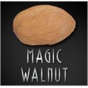 NOZ MAGICA DE LATEX - MAGIC WALNUT