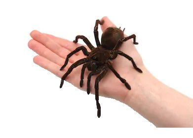 Aranha na mão - Magica The Web B+