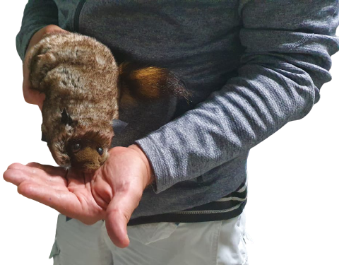 Robby  The Raccoon + Video Explicativo G+
