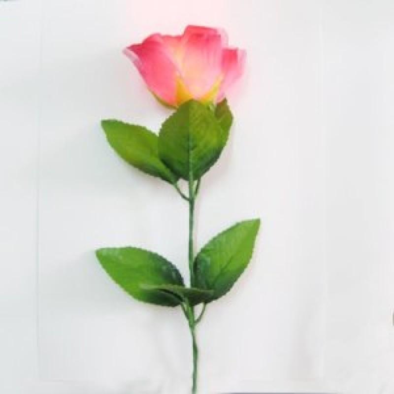 Rose D lite + D lite