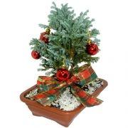 Bonsai de Natal