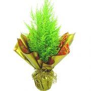 Pinheiro Verde de Natal