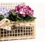 Baú de Violetas Coloridas