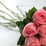 Buquê Delicadeza de Rosas