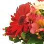Flores do Campo Alegre