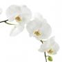 Orquídea Branca no Cesto de Palha