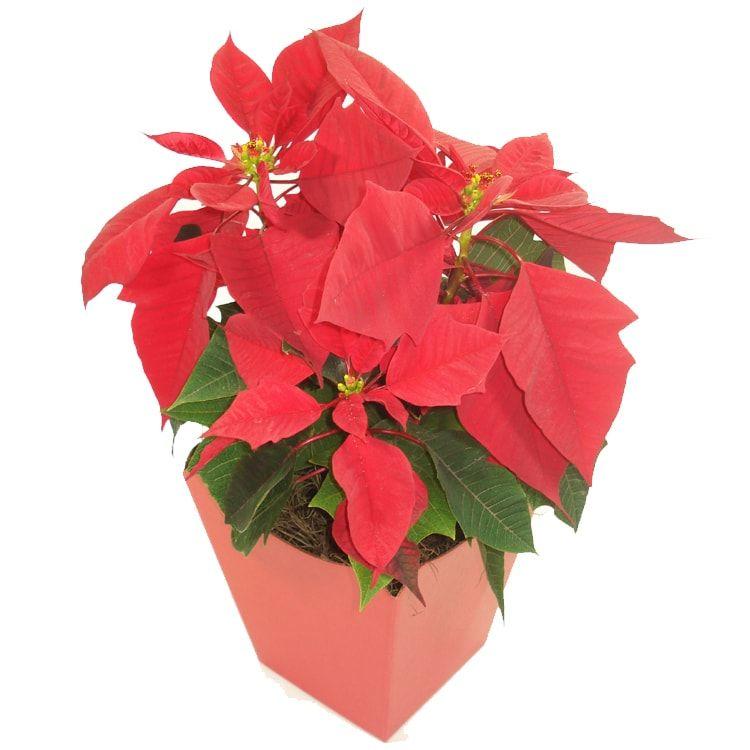 Beleza de Natal