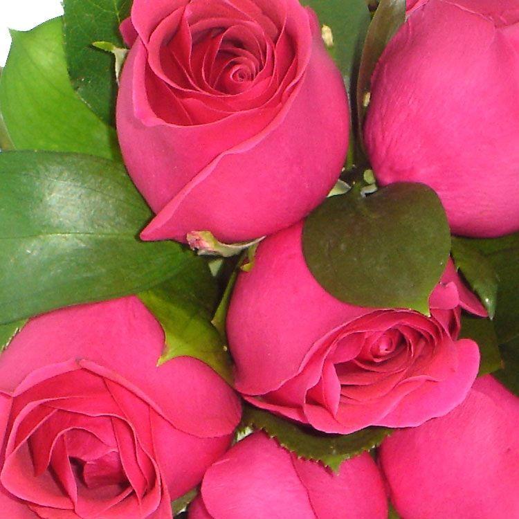 Buquê Rosas Maravilha Pink