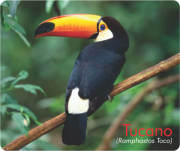 Apito Tucano