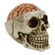 Caveira Crânio Cérebro Exposto