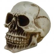 Caveira Crânio Comum Pequeno.