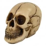 Caveira Crânio Homem das Cavernas