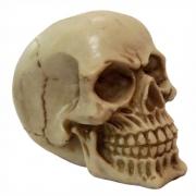 Caveira Crânio médio decoração