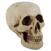 Crânio Caveira Tamanho Real Decoração