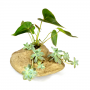 Pedra artificial para plantação de Orquidea