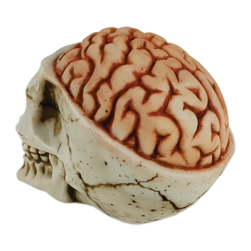 Caveira Crânio Cérebro Exposto.