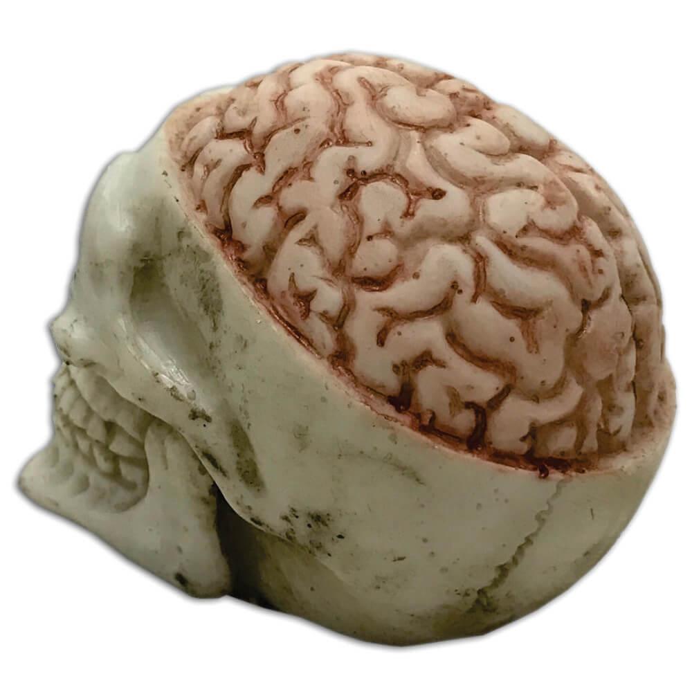 Caveira Crânio Cérebro Exposto Pequeno.