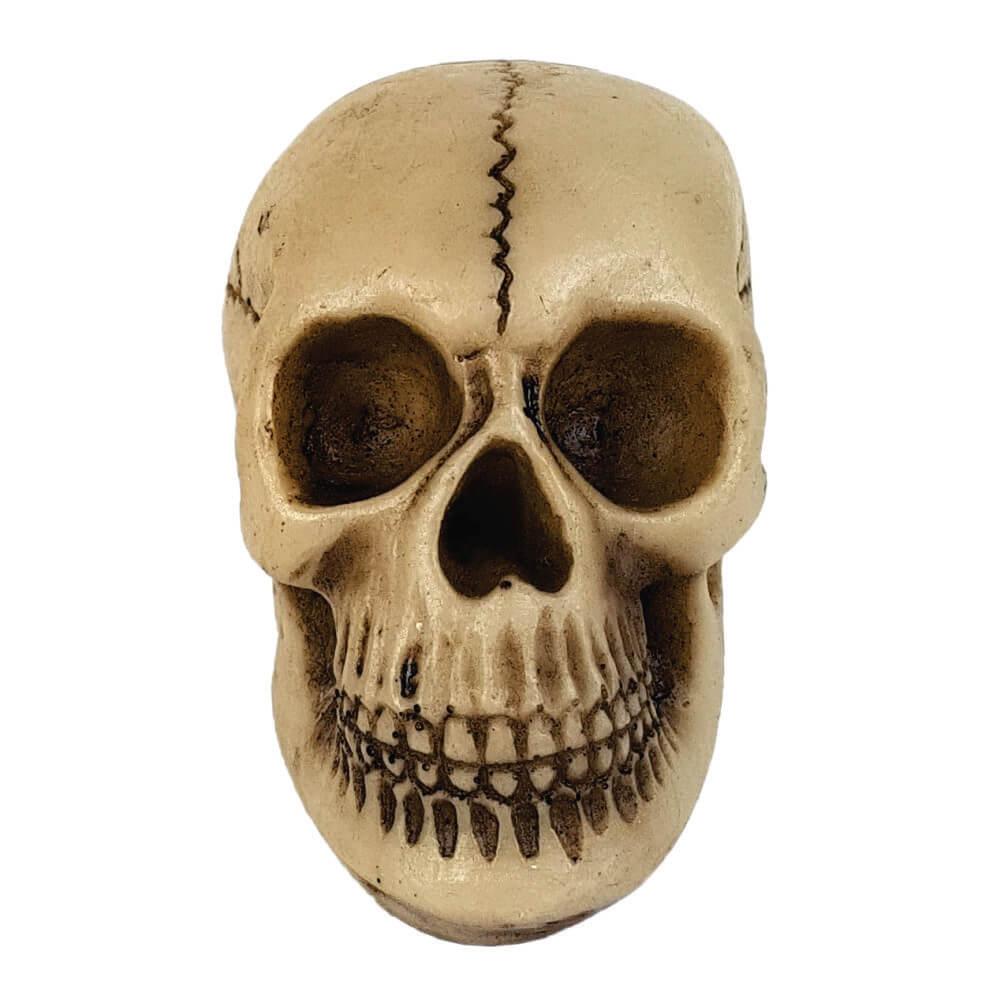 Caveira Crânio Homem das Cavernas.