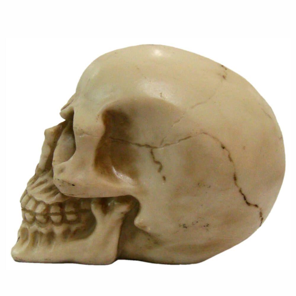 Crânio Caveira tamanho médio decoração.