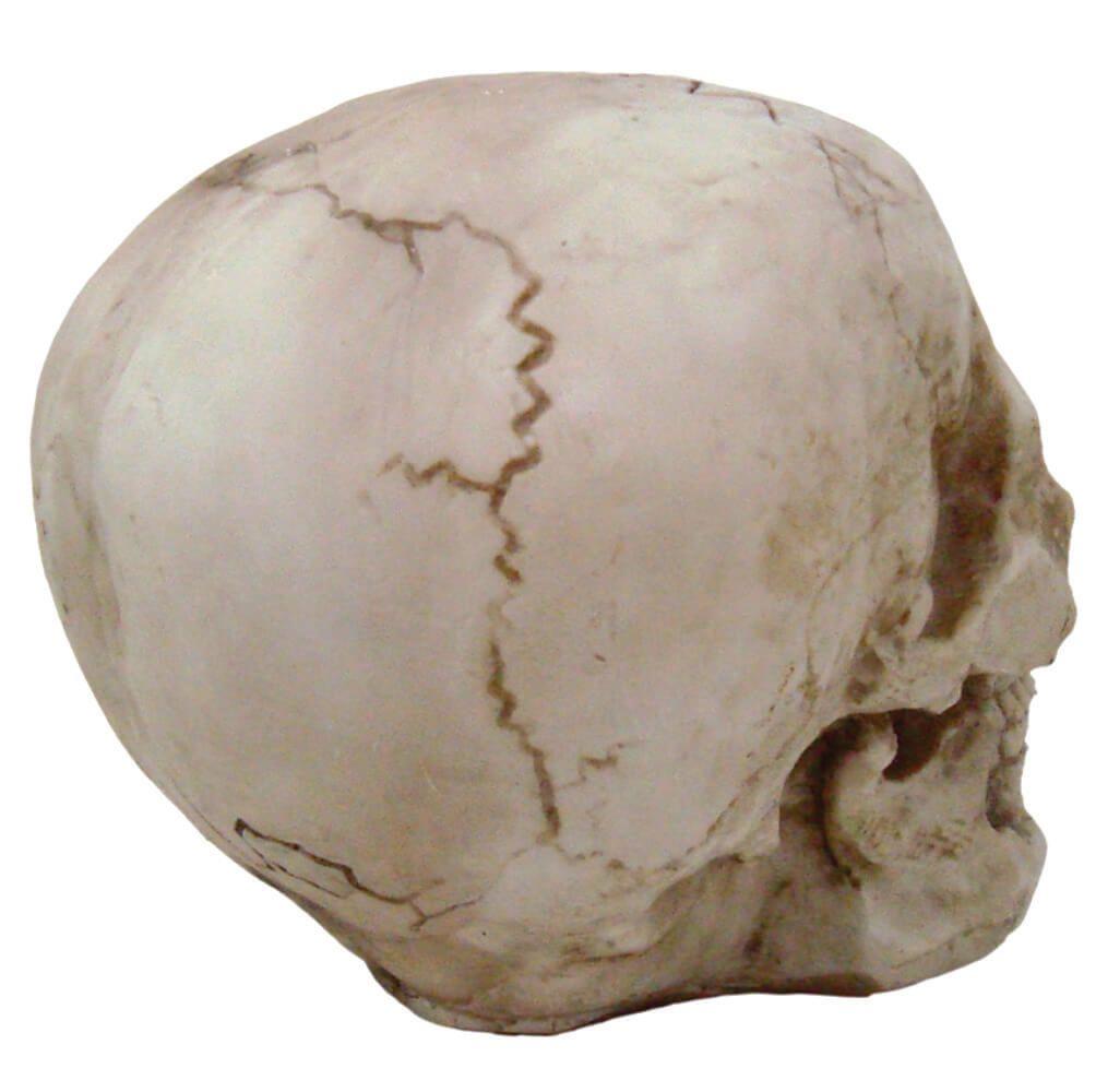 Crânio Caveira Tamanho Real Decoração.