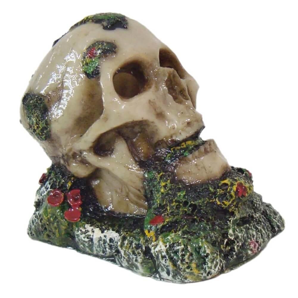 Cranio Com Musgo enfeite para aquário decoração.