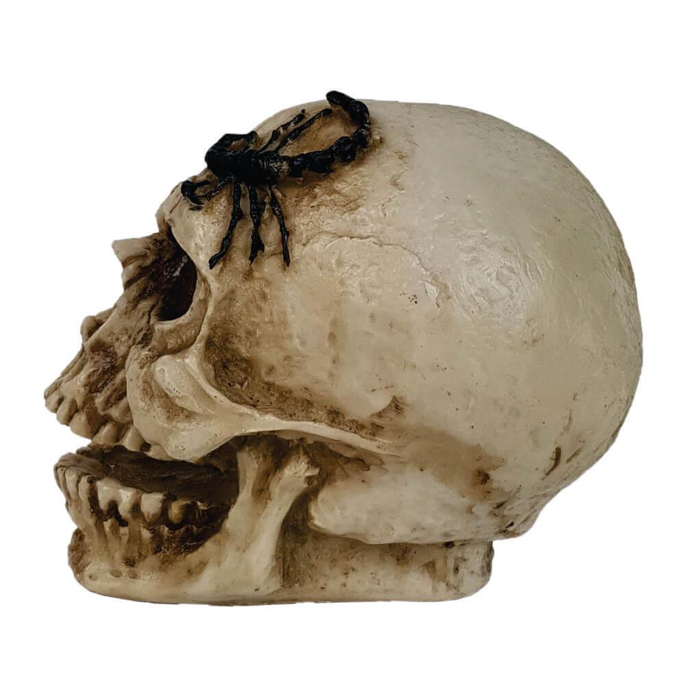 Crânio Caveira Escorpião decorativo resina grande.
